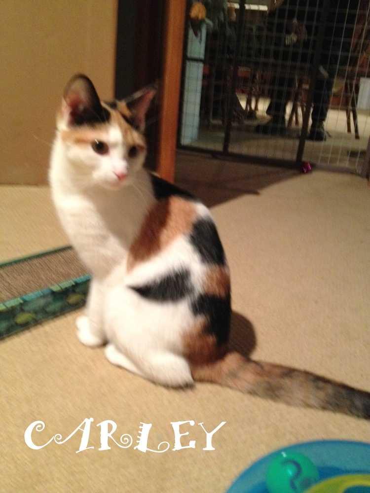 Carley0