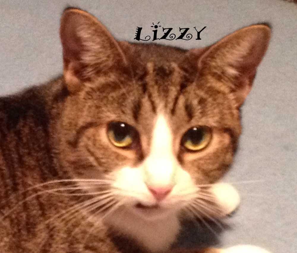 Lizzy8