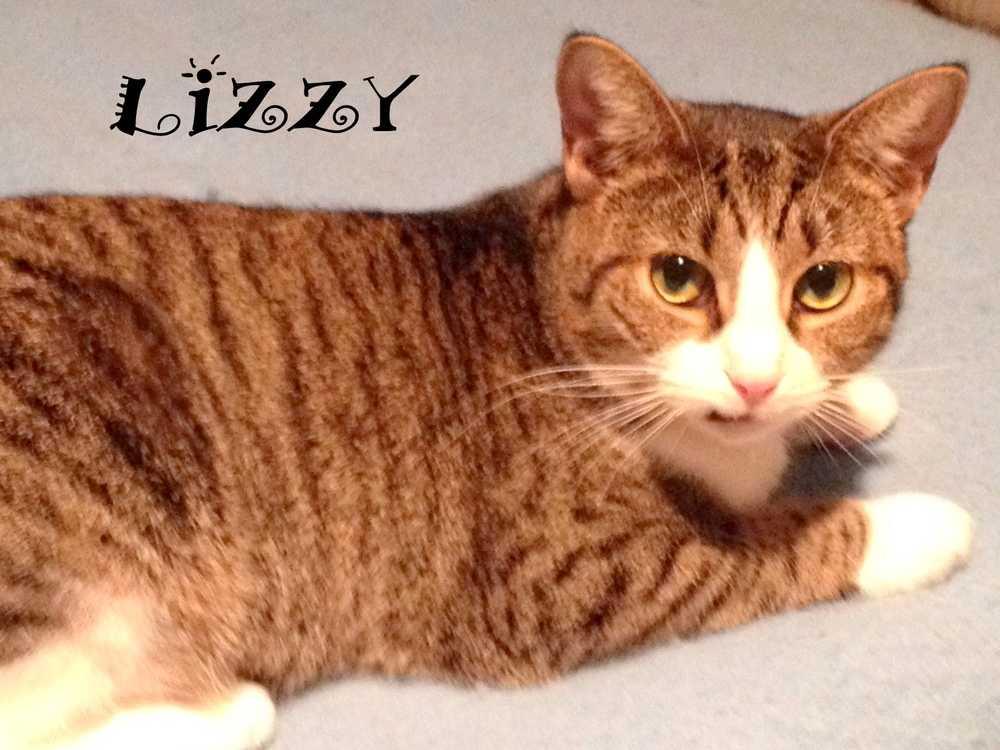 Lizzy9