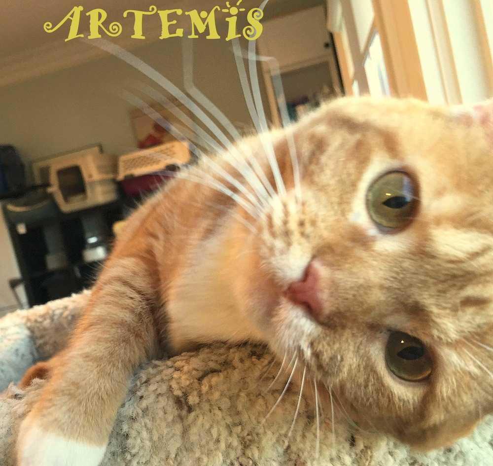 Artemis ss