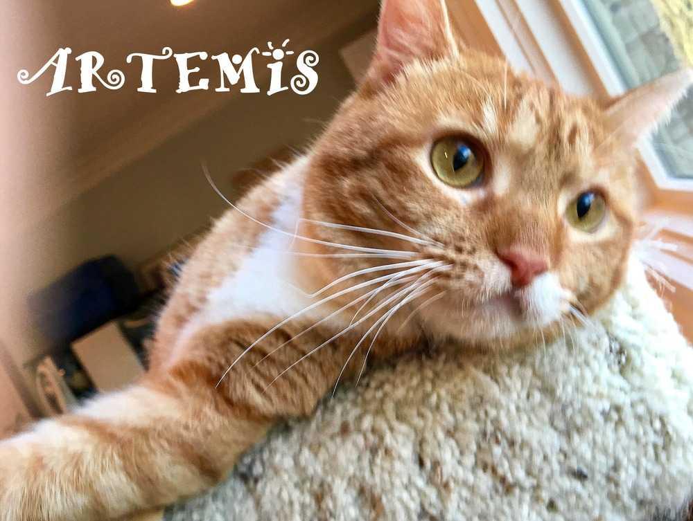 Artemisff