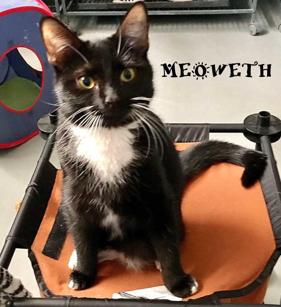 Meoweth