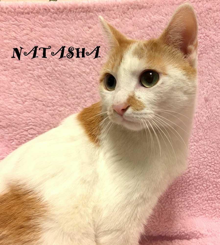 Natassha2