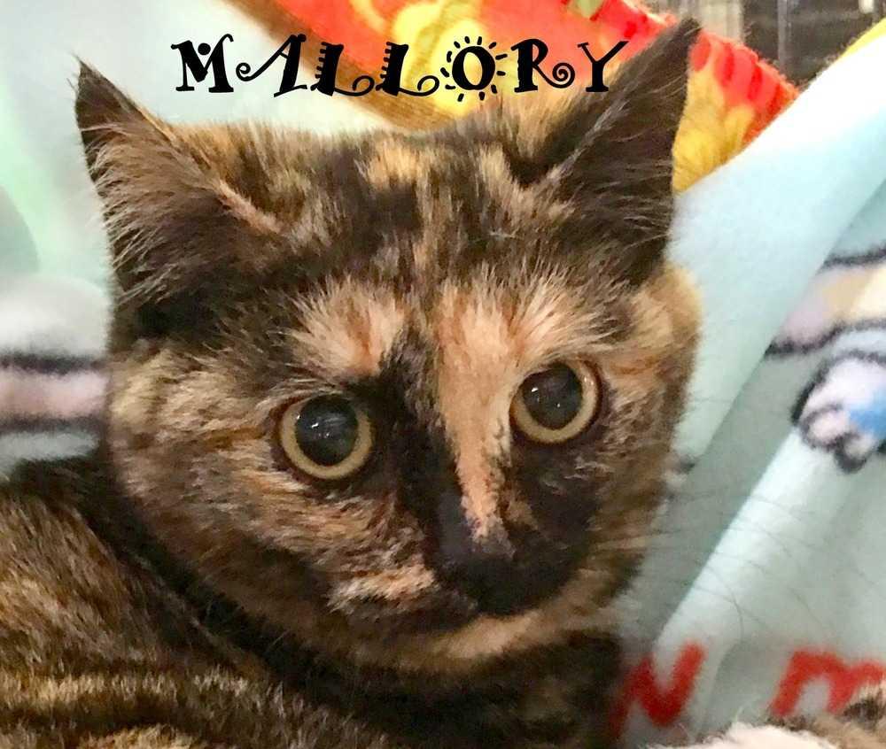 Mallory 3