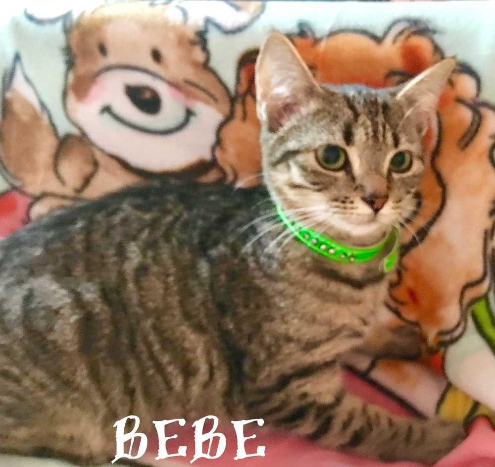 Bebe3