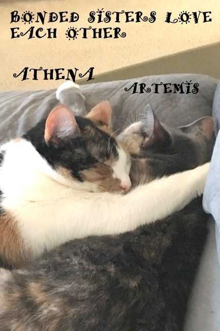 Artemis and athena