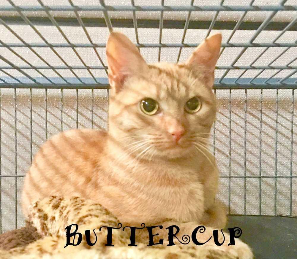 Buttercup4