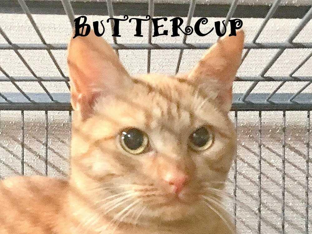 Buttercup3
