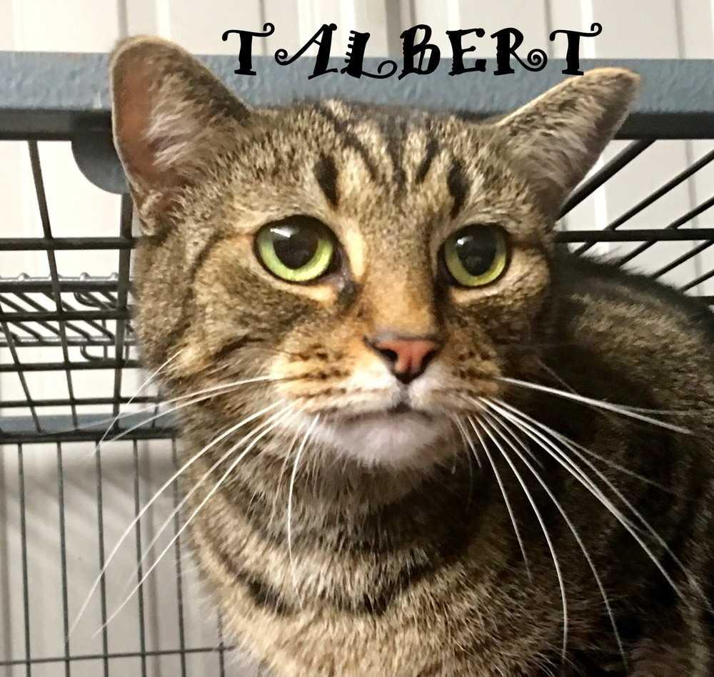 Talbert4