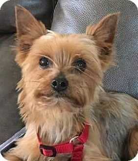 augusta dog adoptions