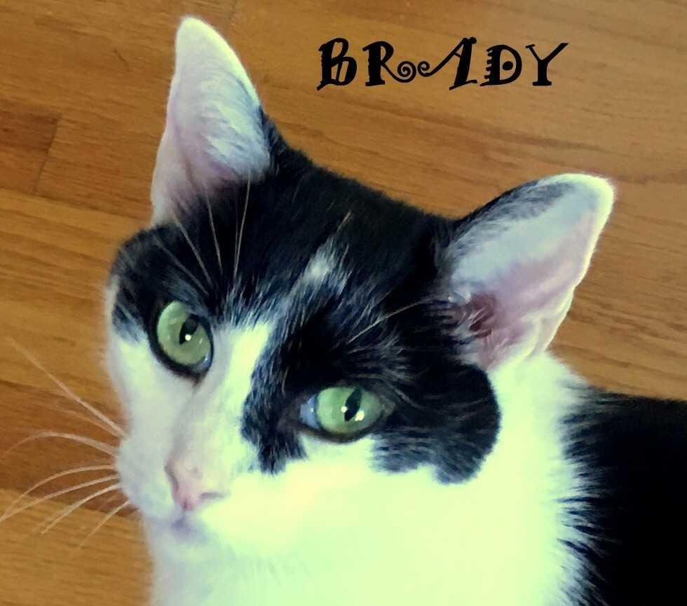 Brady 5