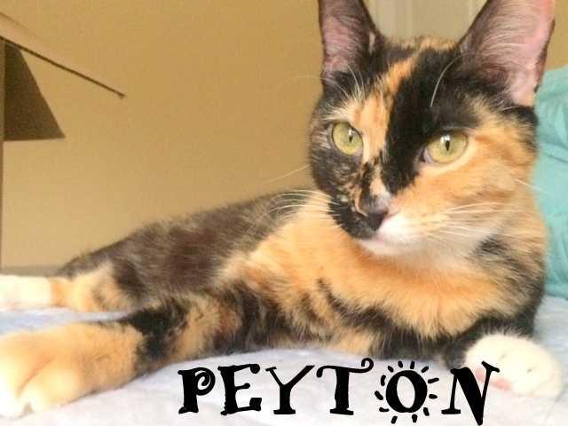 Peyton 1
