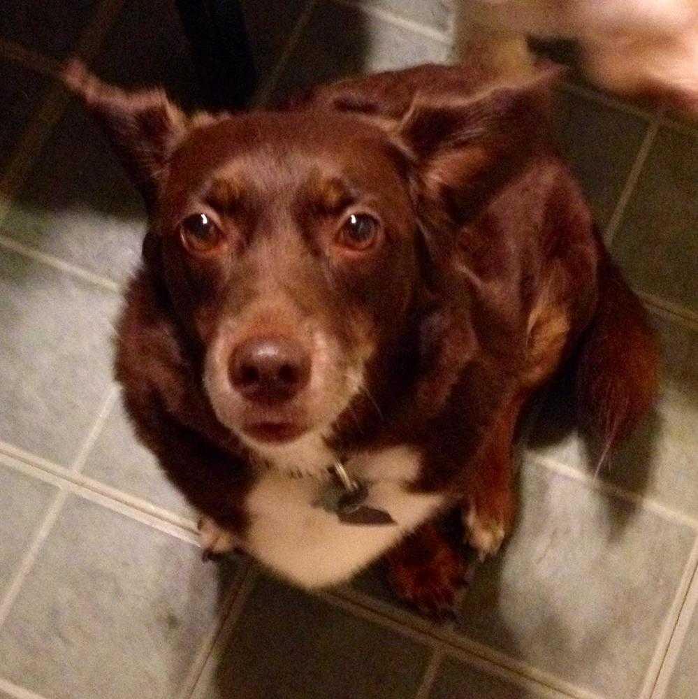 adoptable dogs u2014 heartland small animal rescue inc