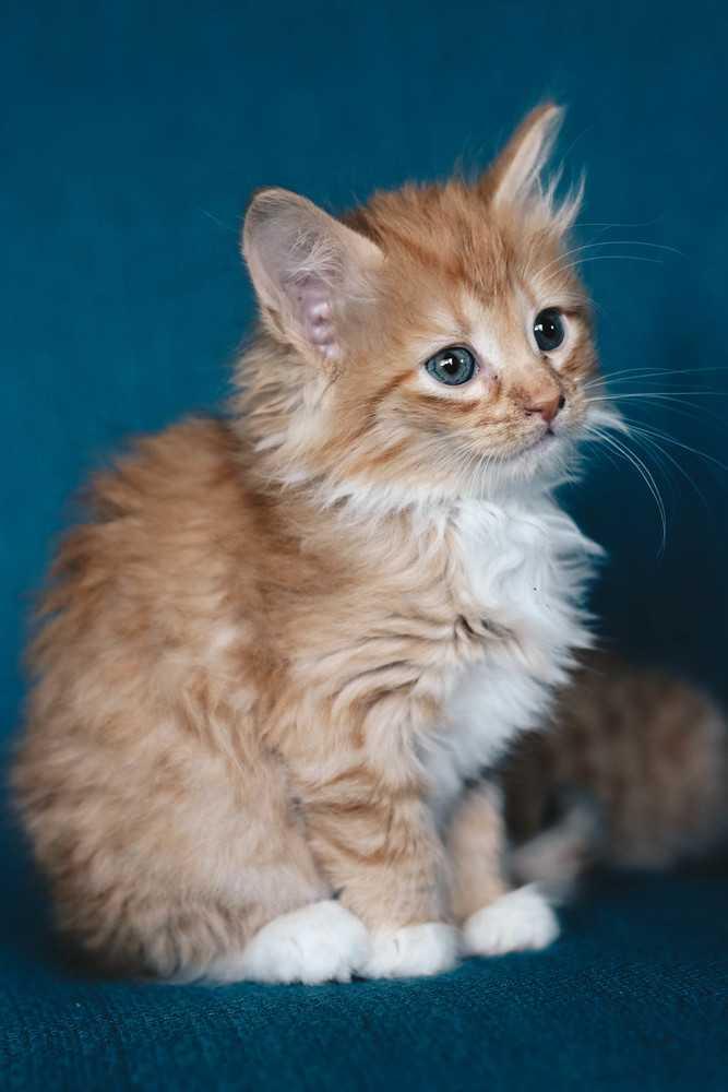 Kittens417 17