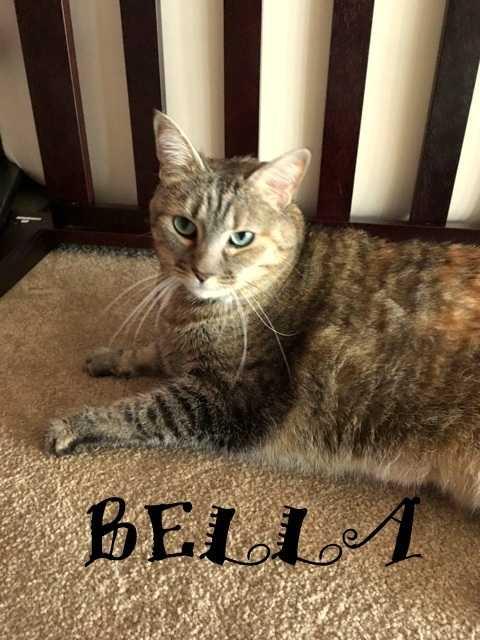 Bella on floor