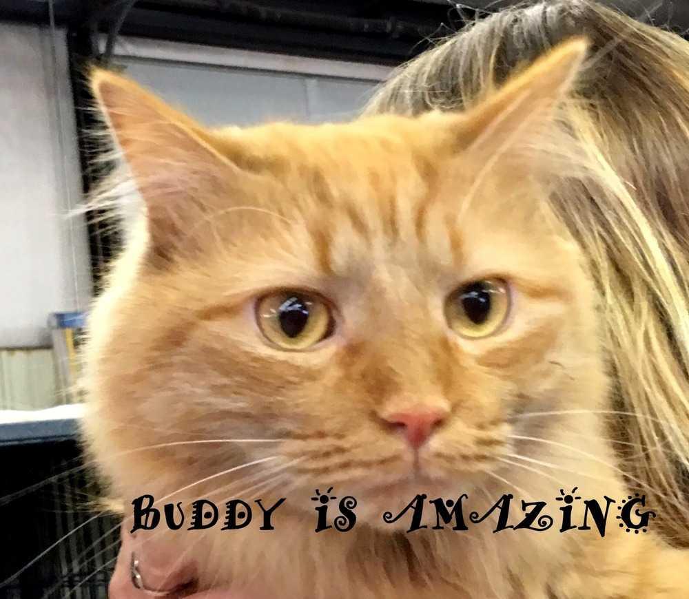 Buddy aa