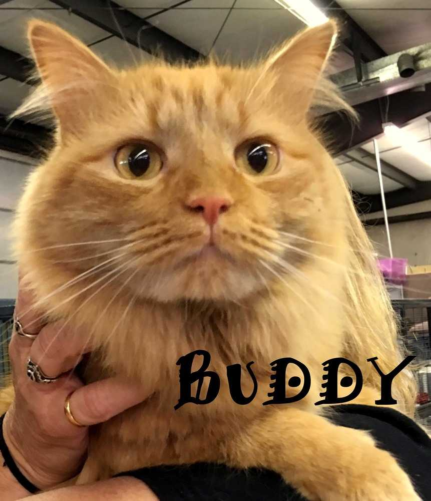 Buddyaaa