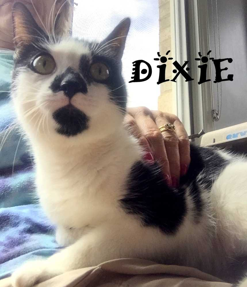 Dixie dorie mom