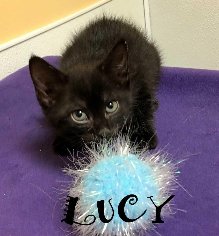 Lucy zz