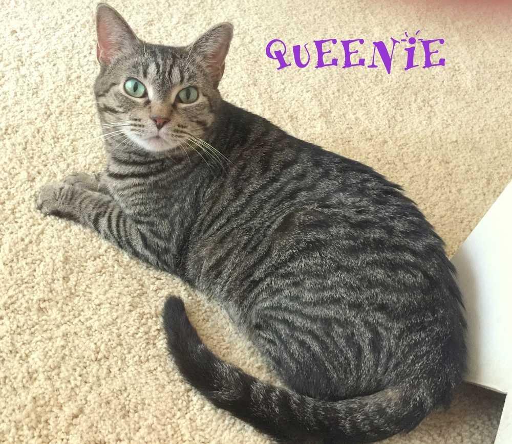 Queenie3