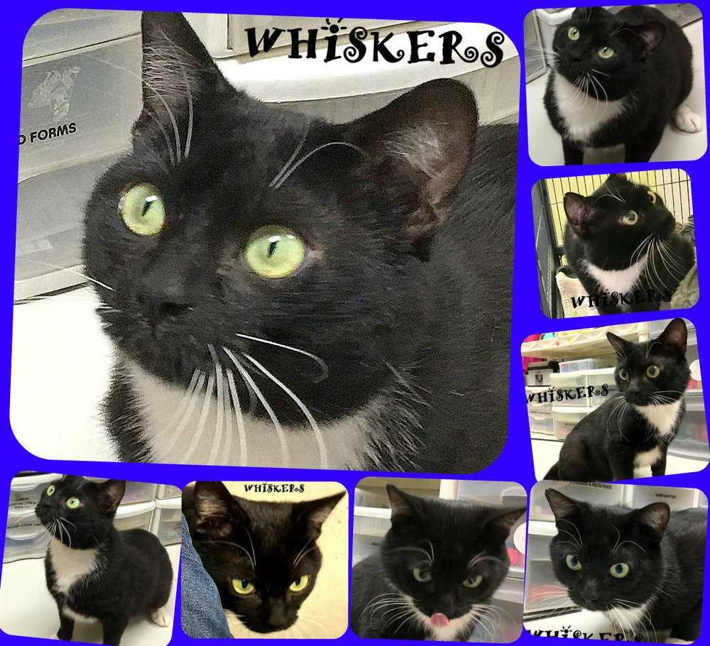 Whiskers collage