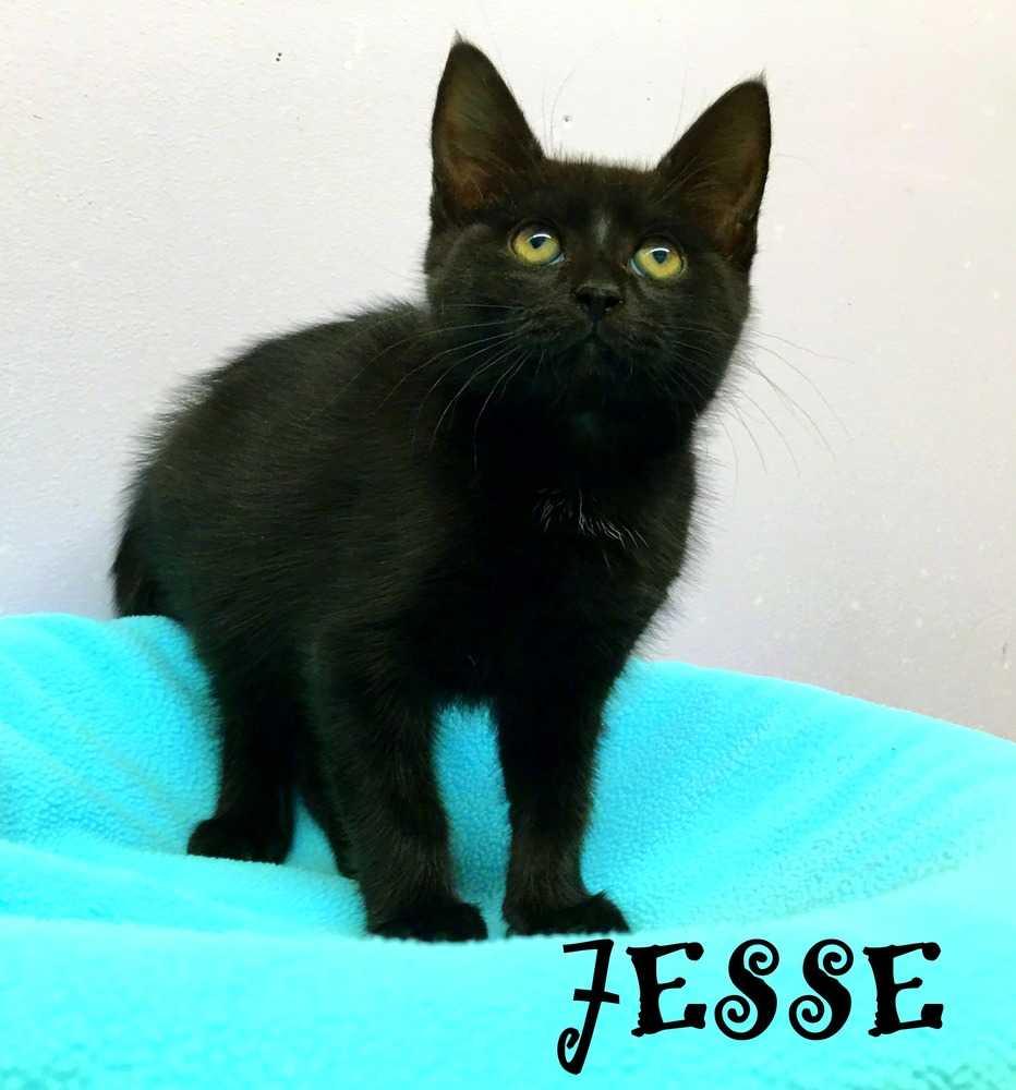 Jesse 4