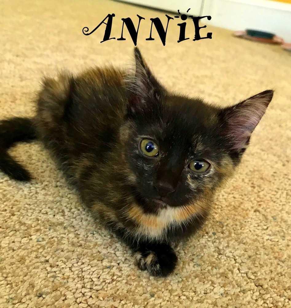 Annie 2.jpg3