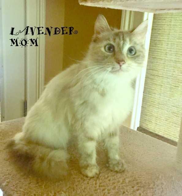 Lavender mom