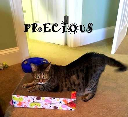 Precious d