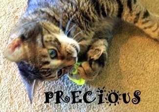 Preciousc