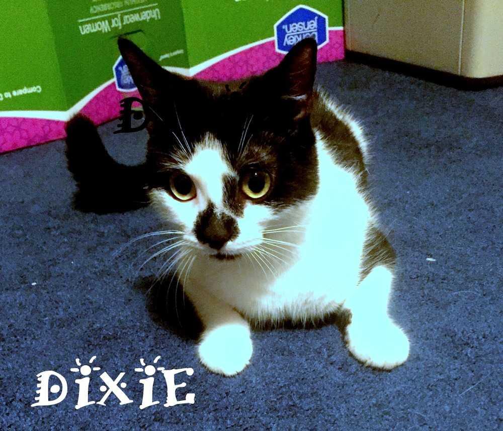 Dixie 2