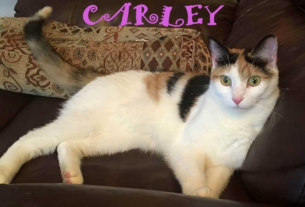 Carley aa