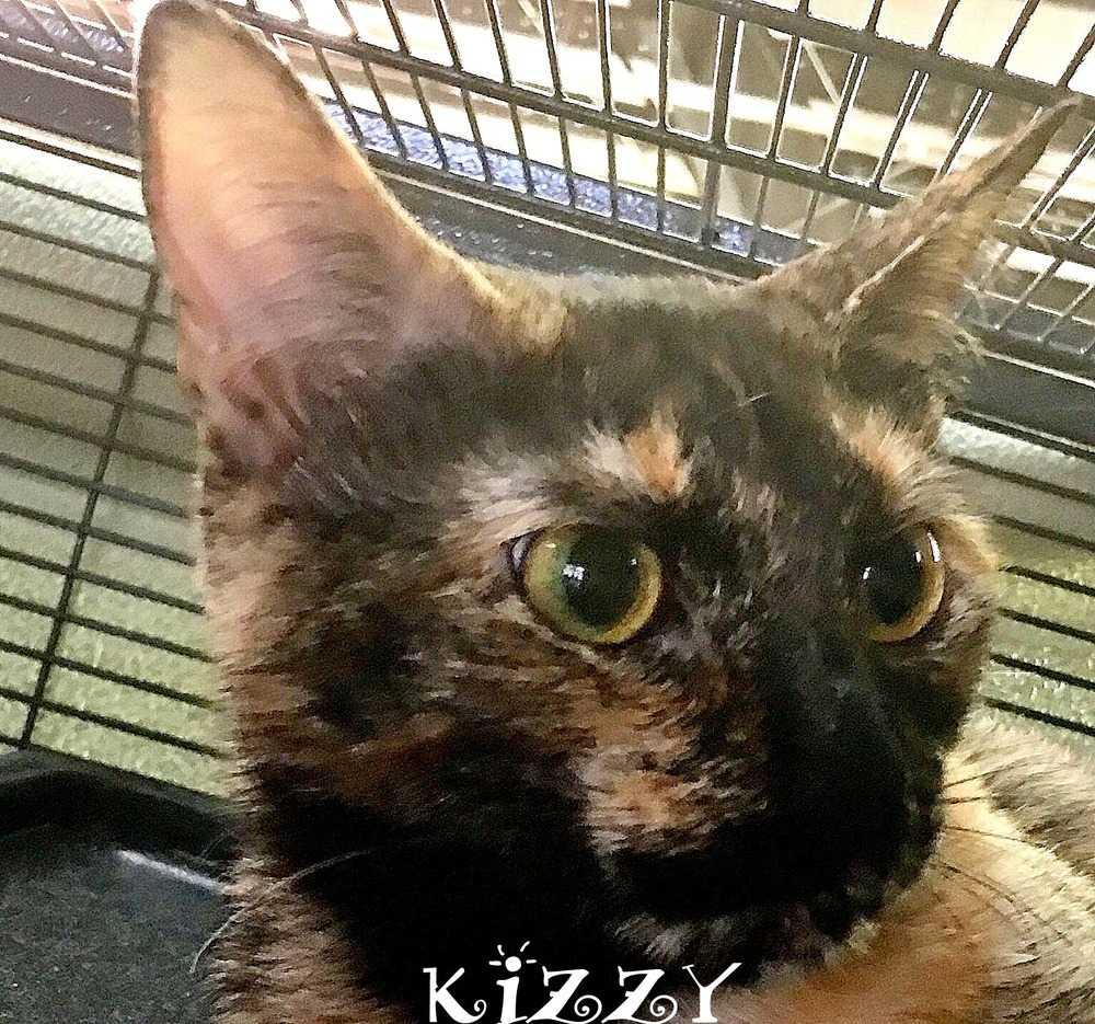 Kizzy 2