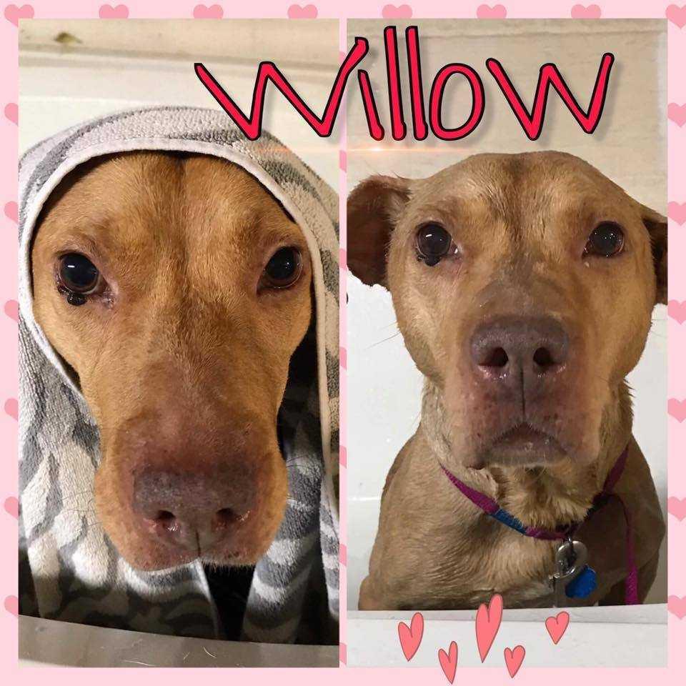 Willow gwen