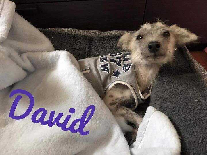 David.1