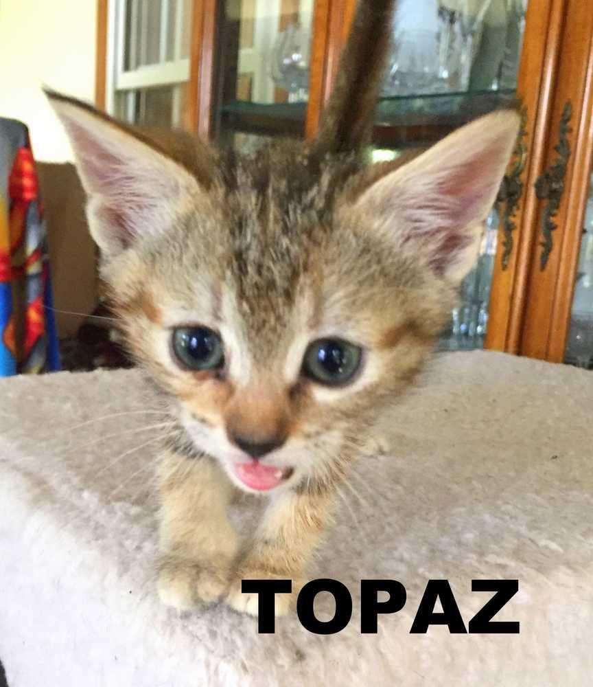 Topaz 3