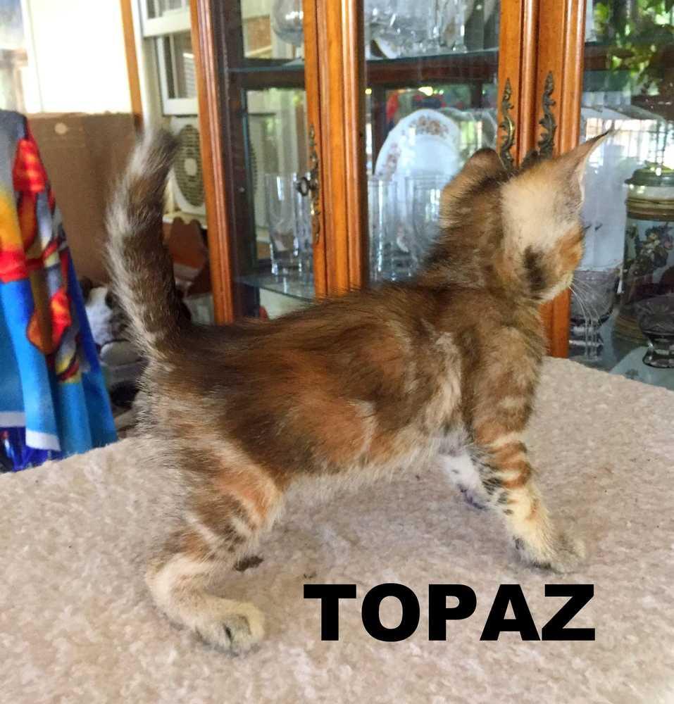 Topaz 2