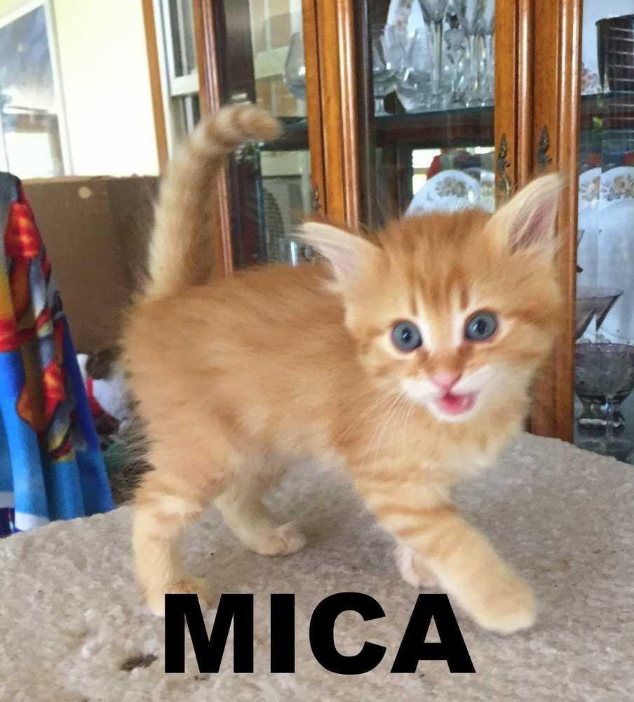 Mica 55