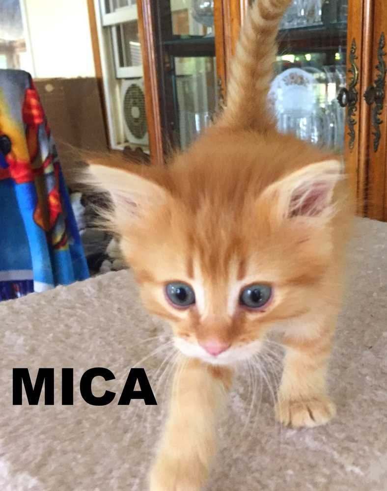 Mica 23