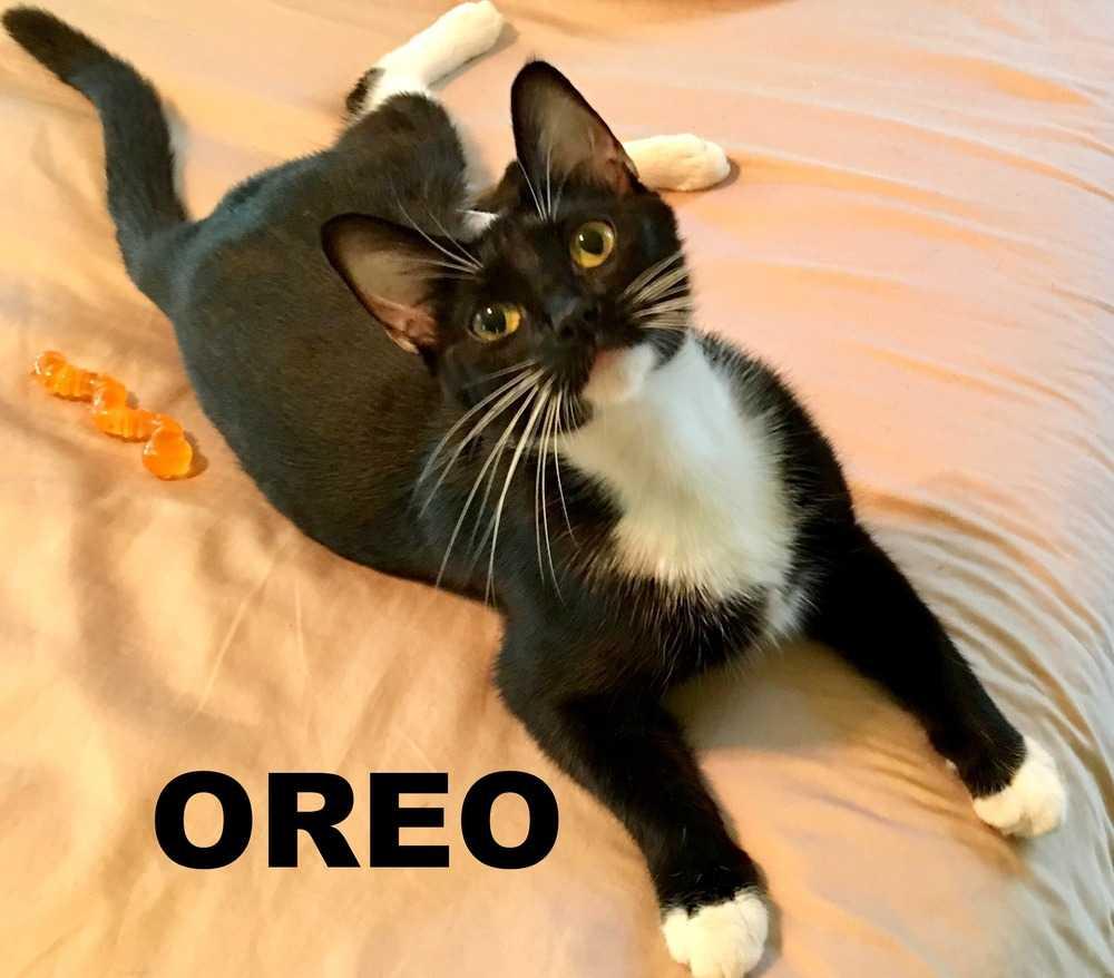 Oreo rr