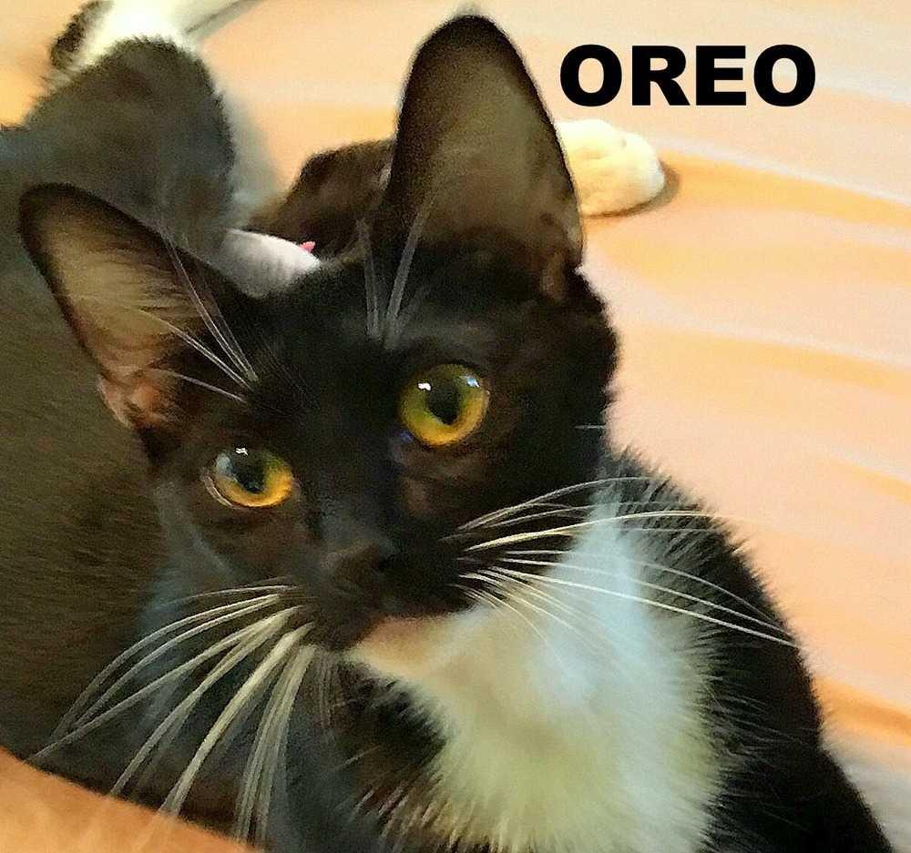 Oreo face