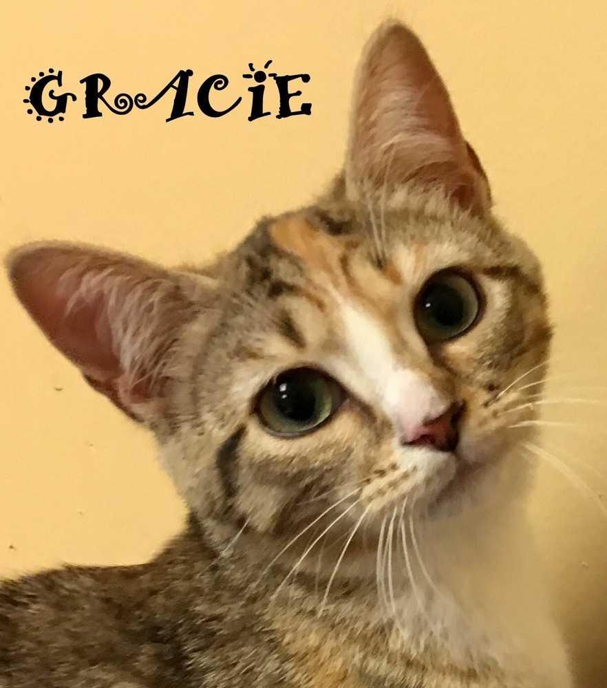 Gracie4