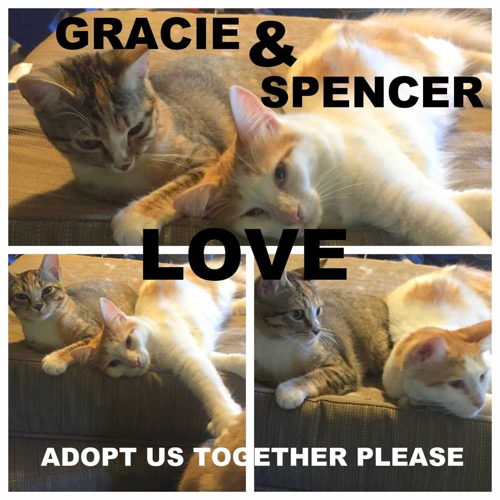 Gracie and spencer