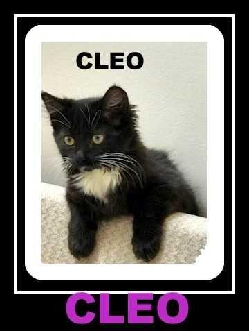 Cleo  jeni