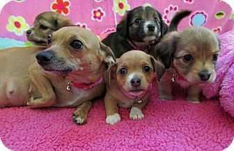 Petstablished manage your animal welfare organization awo with adopt m4hsunfo