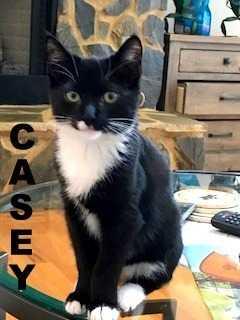 Casey 67
