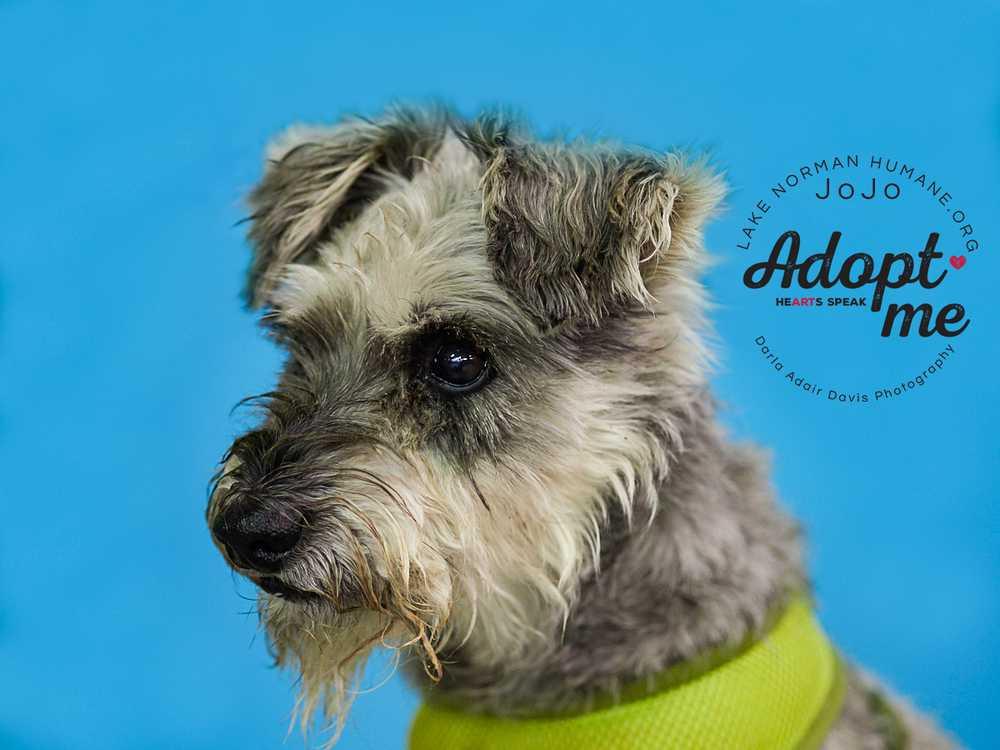 P8280537jojo canine adopt me profile