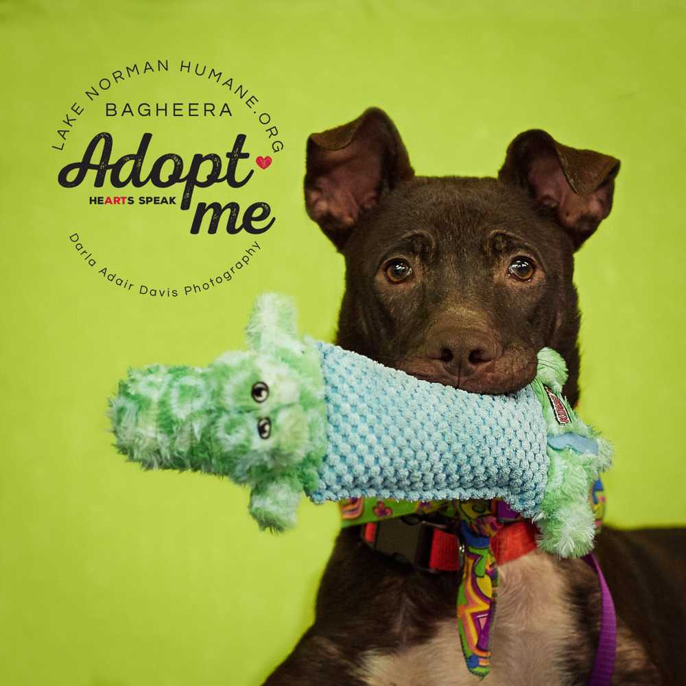 P8280899 bageria canine alert w toy adopt me
