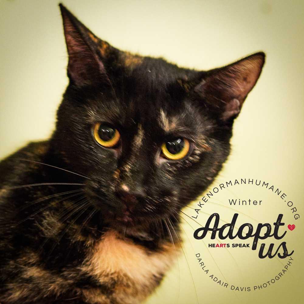 P8282260 winter feline adopt us