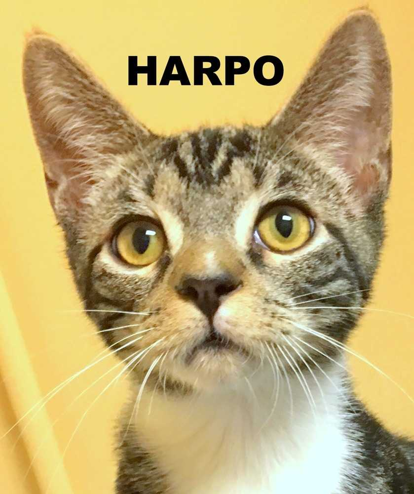Harpo 2